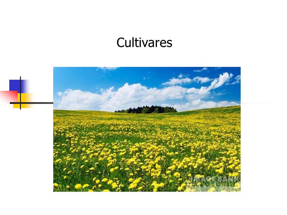 Cultivares