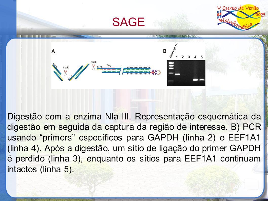 Digestão com a enzima Nla III. Representação esquemática da digestão em seguida da captura da região de interesse. B) PCR usando primers específicos p
