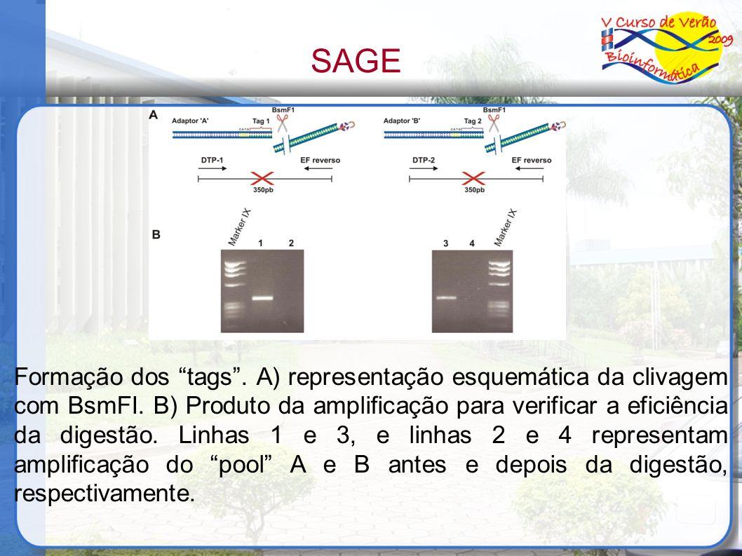 Formação dos tags. A) representação esquemática da clivagem com BsmFI. B) Produto da amplificação para verificar a eficiência da digestão. Linhas 1 e