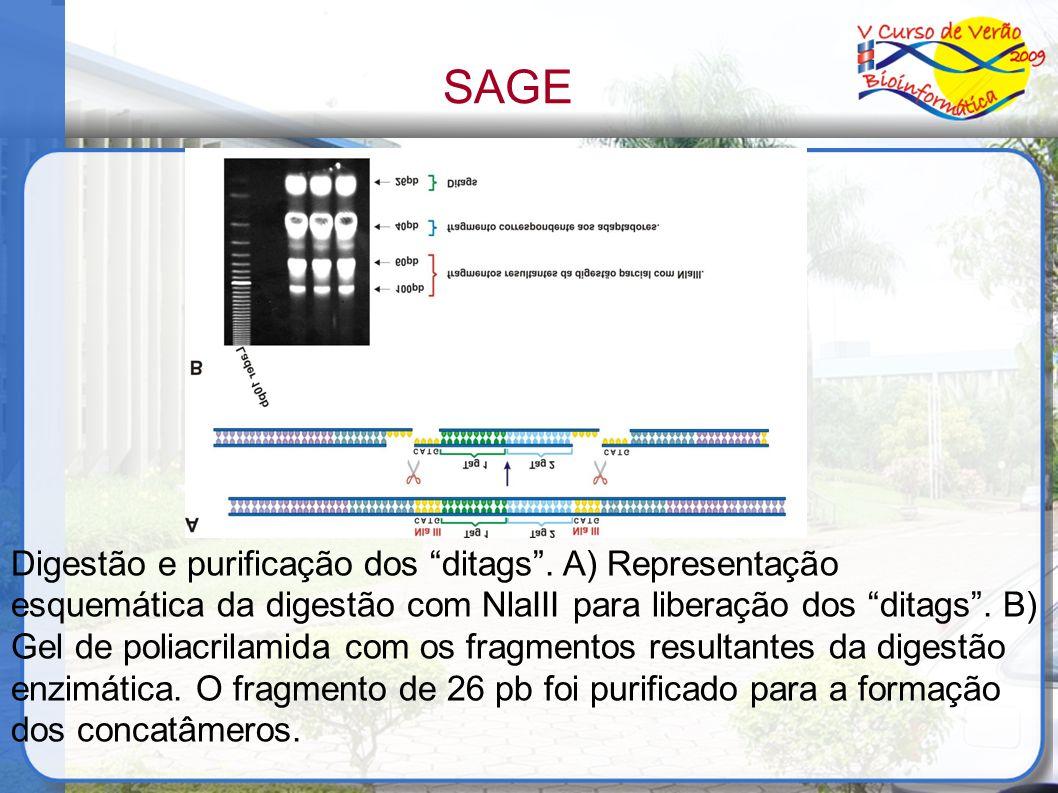 Digestão e purificação dos ditags. A) Representação esquemática da digestão com NlaIII para liberação dos ditags. B) Gel de poliacrilamida com os frag