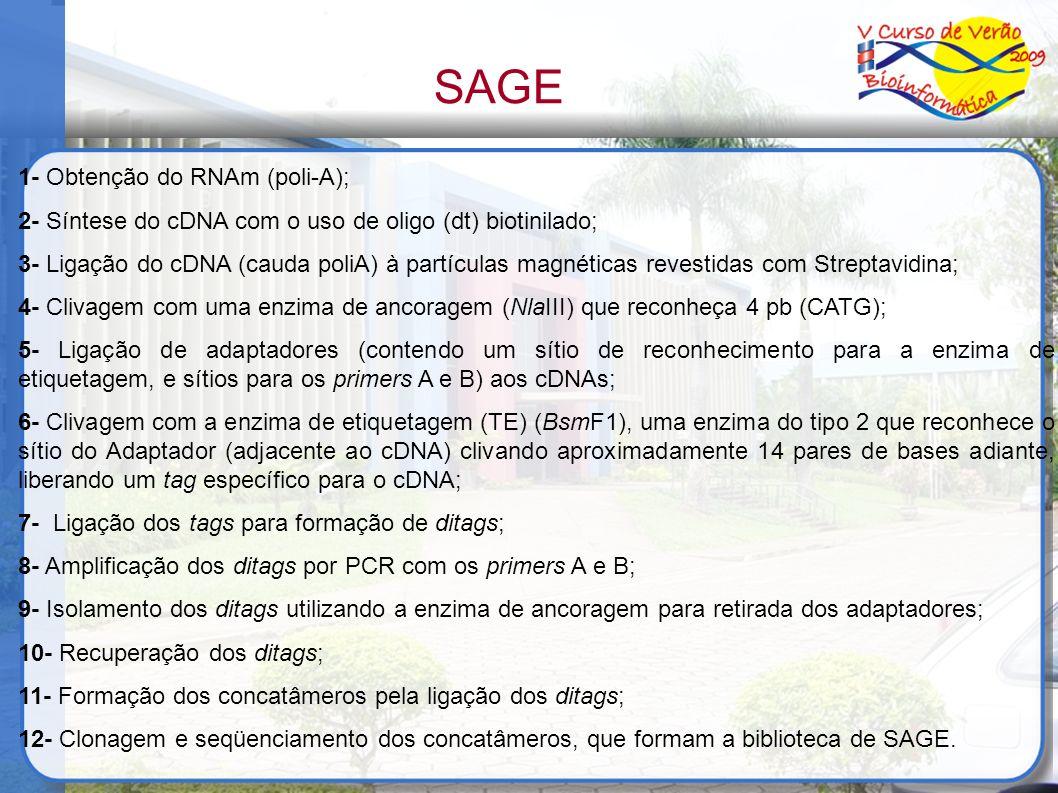 SAGE 1- Obtenção do RNAm (poli-A); 2- Síntese do cDNA com o uso de oligo (dt) biotinilado; 3- Ligação do cDNA (cauda poliA) à partículas magnéticas re