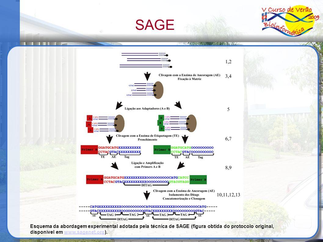 SAGE Esquema da abordagem experimental adotada pela técnica de SAGE (figura obtida do protocolo original, disponível em www.sagenet.org).www.sagenet.o