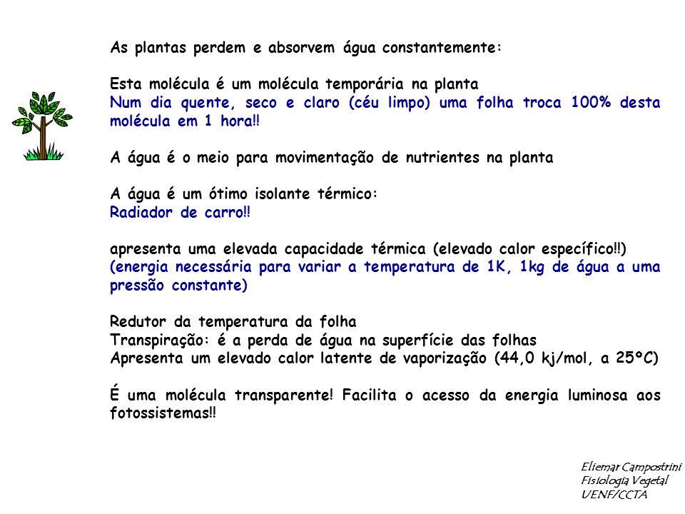 Eliemar Campostrini Fisiologia Vegetal UENF/CCTA As plantas perdem e absorvem água constantemente: Esta molécula é um molécula temporária na planta Nu