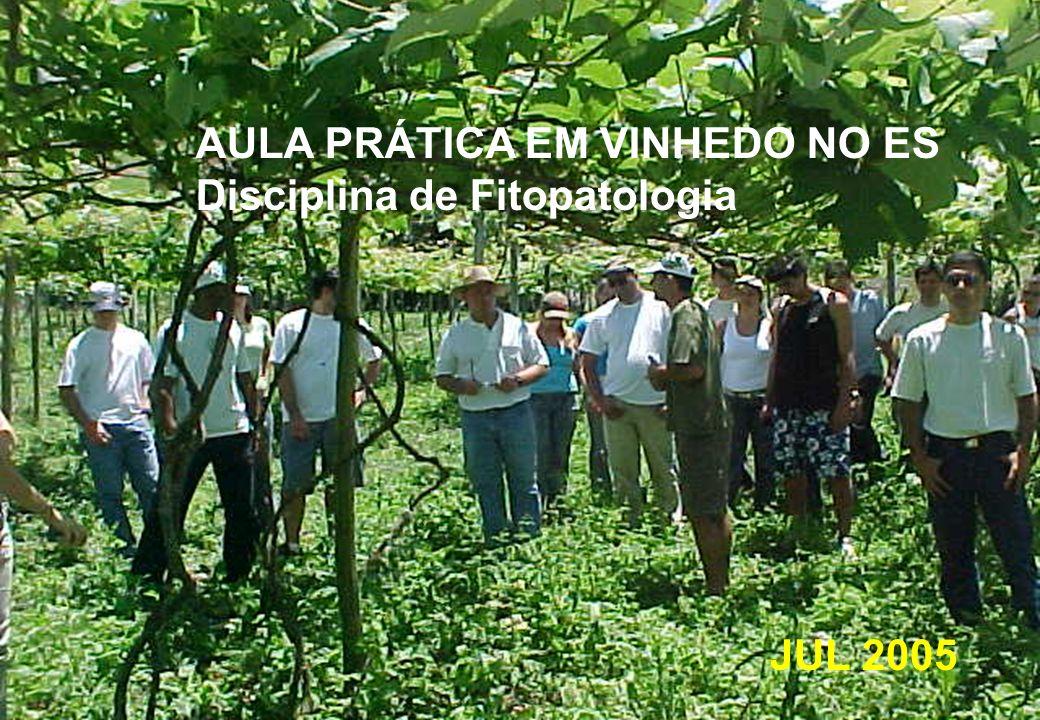 AULA PRÁTICA EM VINHEDO NO ES Disciplina de Fitopatologia JUL 2005