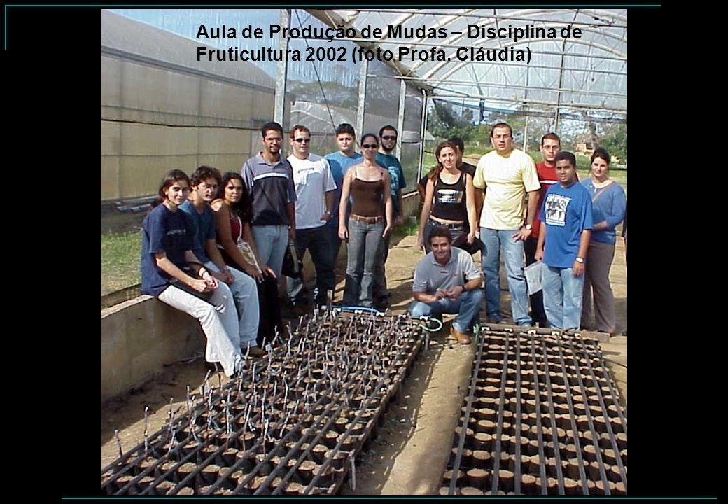 Aula de Produção de Mudas – Disciplina de Fruticultura 2002 (foto Profa. Cláudia)