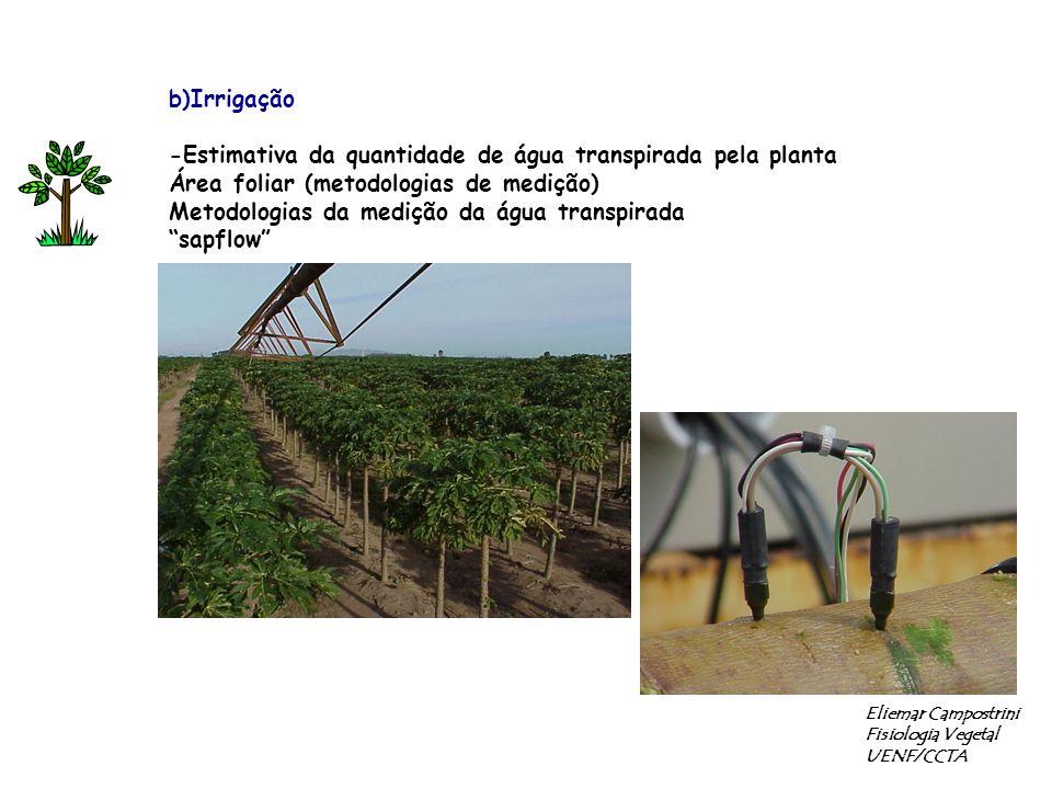 b)Irrigação -Estimativa da quantidade de água transpirada pela planta Área foliar (metodologias de medição) Metodologias da medição da água transpirada sapflow Eliemar Campostrini Fisiologia Vegetal UENF/CCTA