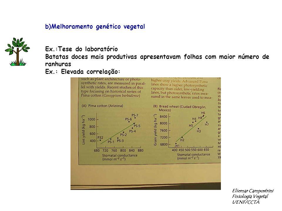 b)Melhoramento genético vegetal Ex.:Tese do laboratório Batatas doces mais produtivas apresentavam folhas com maior número de ranhuras Ex.: Elevada correlação: Eliemar Campostrini Fisiologia Vegetal UENF/CCTA