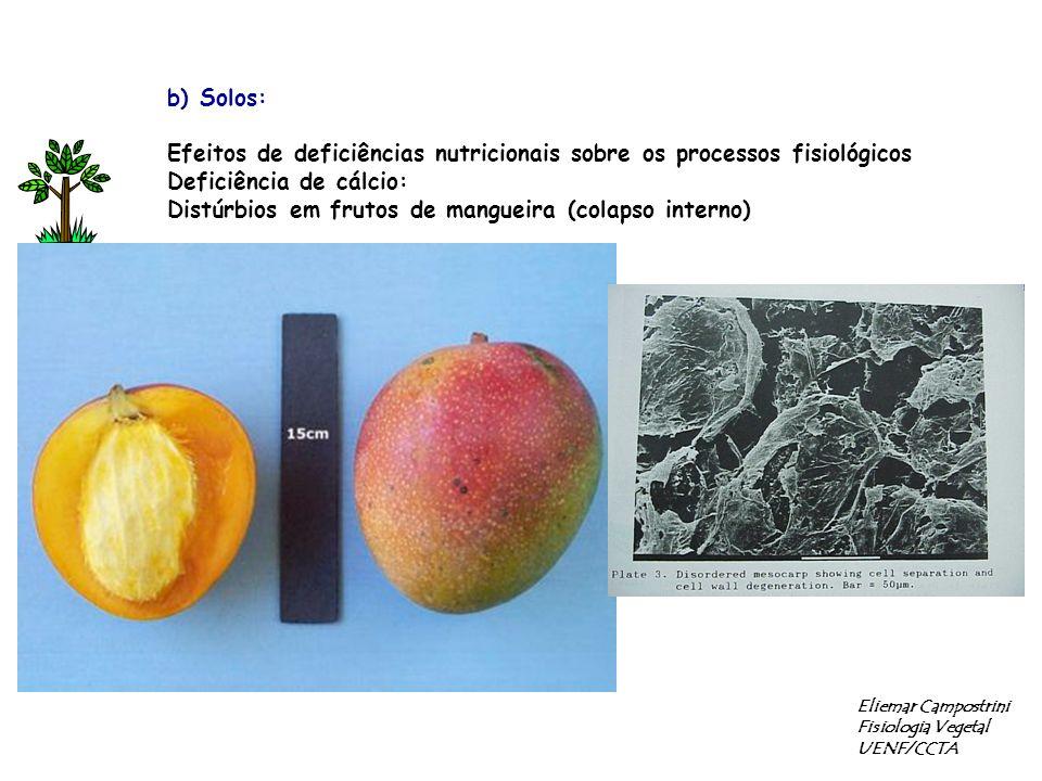 b) Solos: Efeitos de deficiências nutricionais sobre os processos fisiológicos Deficiência de cálcio: Distúrbios em frutos de mangueira (colapso interno) Eliemar Campostrini Fisiologia Vegetal UENF/CCTA