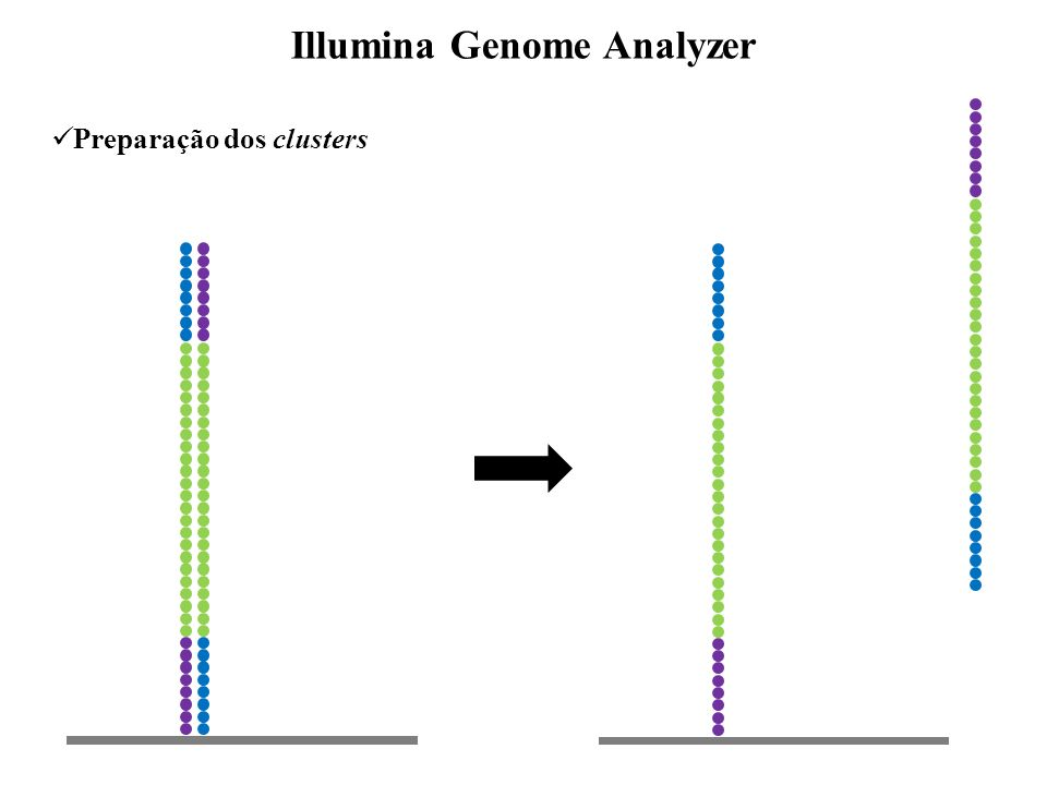 Preparação dos clusters Illumina Genome Analyzer