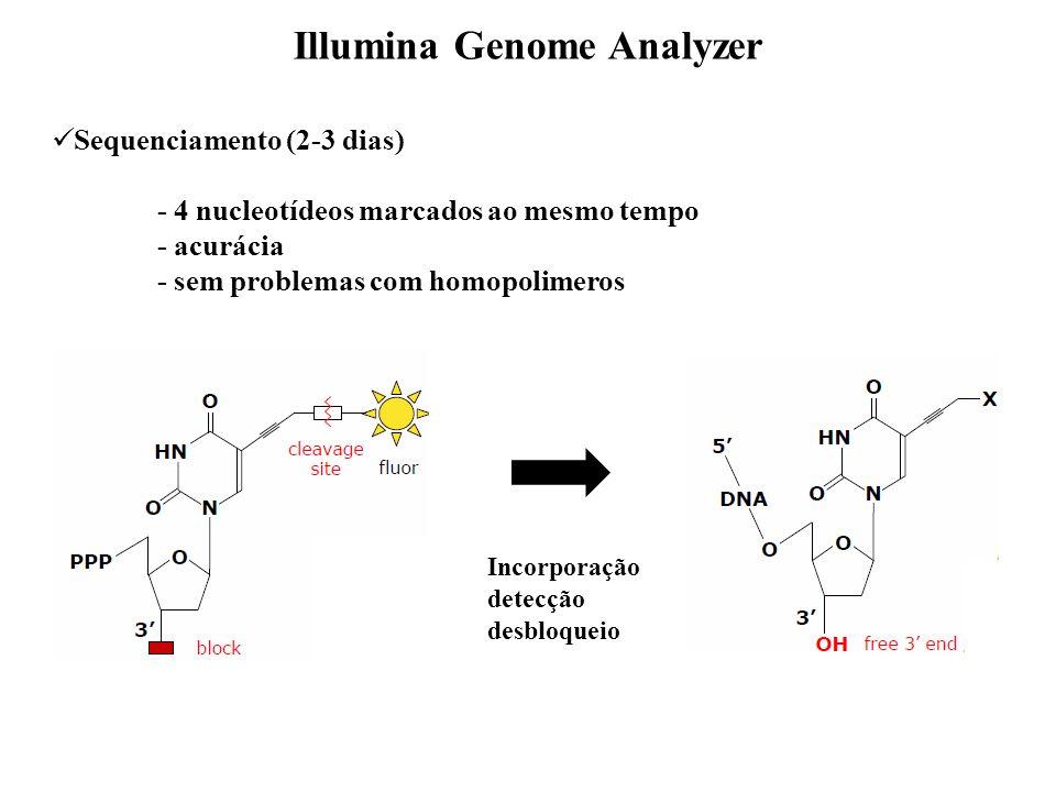 Sequenciamento (2-3 dias) - 4 nucleotídeos marcados ao mesmo tempo - acurácia - sem problemas com homopolimeros Illumina Genome Analyzer Incorporação detecção desbloqueio