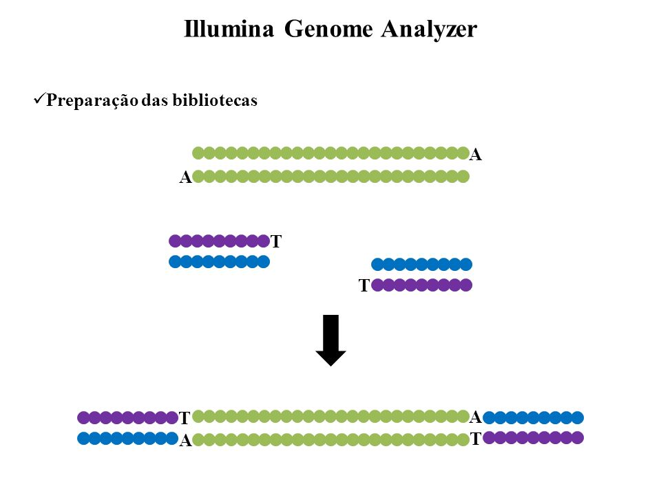 A A T T A A T T Preparação das bibliotecas Illumina Genome Analyzer