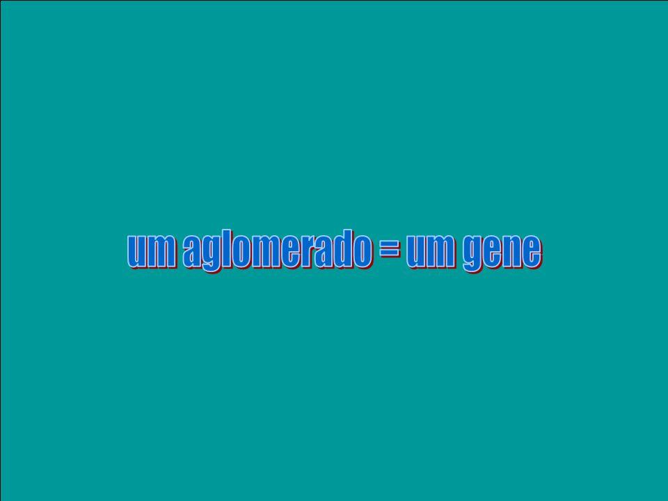 Uma das atividades em bioinformática é formar aglomerados de todas as sequências geradas no projeto (as figurinhas de um álbum) Podemos saber quantas vezes um gene foi seqüenciado e detectar os freqüentes.