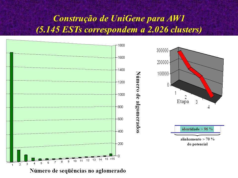 Etapa Número de seqüências no aglomerado Número de algomerados Construção de UniGene para AW1 (5.145 ESTs correspondem a 2.026 clusters) identidade > 96 % alinhamento > 70 % do potencial