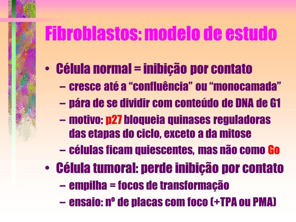 Fibroblastos: modelo de estudo Célula normal = inibição por contato –cresce até a confluência ou monocamada –pára de se dividir com conteúdo de DNA de
