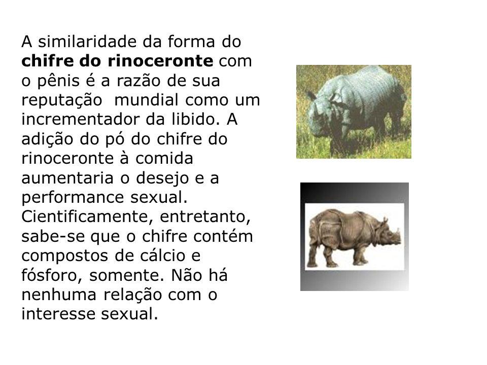 A similaridade da forma do chifre do rinoceronte com o pênis é a razão de sua reputação mundial como um incrementador da libido. A adição do pó do chi