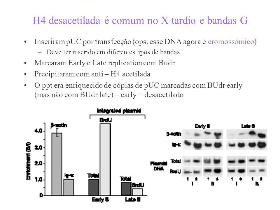 H4 desacetilada é comum no X tardio e bandas G Inseriram pUC por transfecção (ops, esse DNA agora é cromossômico) –Deve ter inserido em diferentes tipos de bandas Marcaram Early e Late replication com Budr Precipitaram com anti – H4 acetilada O ppt era enriquecido de cópias de pUC marcadas com BUdr early (mas não com BUdr late) – early = desacetilado