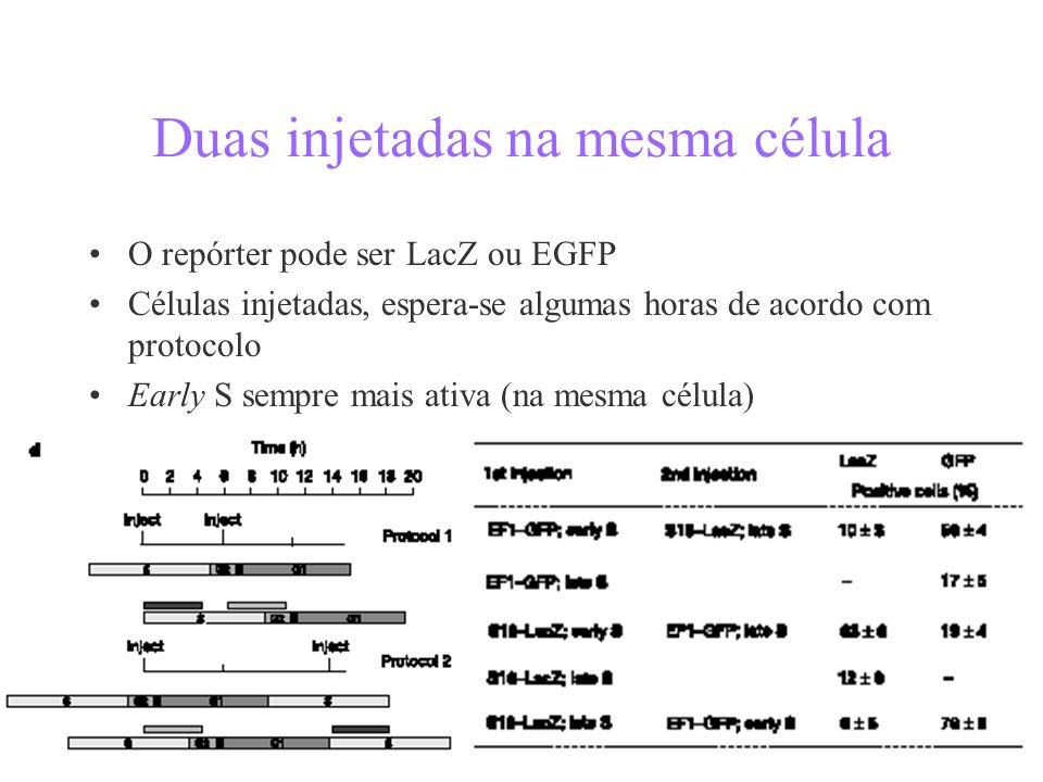 Duas injetadas na mesma célula O repórter pode ser LacZ ou EGFP Células injetadas, espera-se algumas horas de acordo com protocolo Early S sempre mais ativa (na mesma célula)