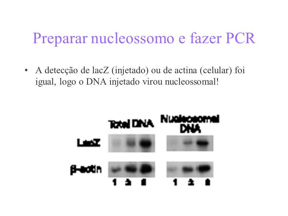 Preparar nucleossomo e fazer PCR A detecção de lacZ (injetado) ou de actina (celular) foi igual, logo o DNA injetado virou nucleossomal!