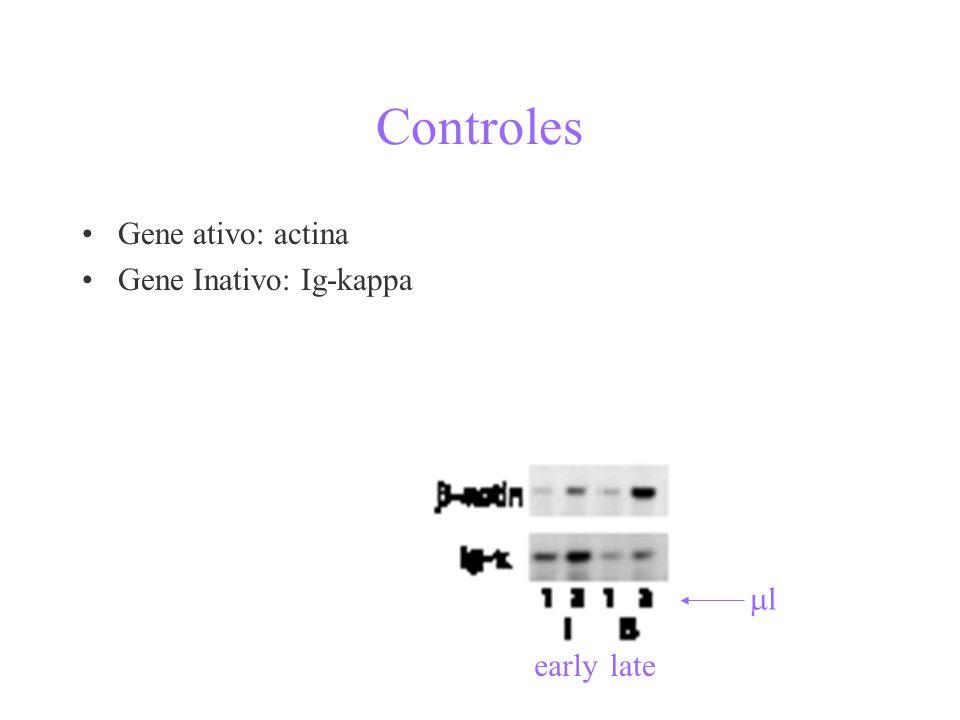 Controles Gene ativo: actina Gene Inativo: Ig-kappa earlylate l
