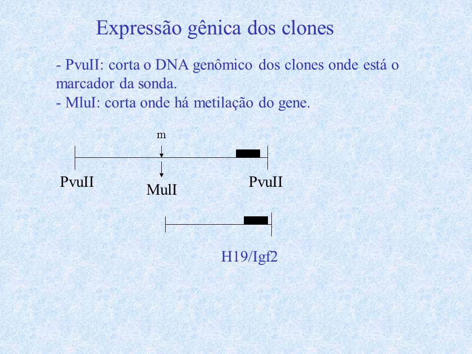 Expressão gênica dos clones - PvuII: corta o DNA genômico dos clones onde está o marcador da sonda. - MluI: corta onde há metilação do gene. PvuII m M
