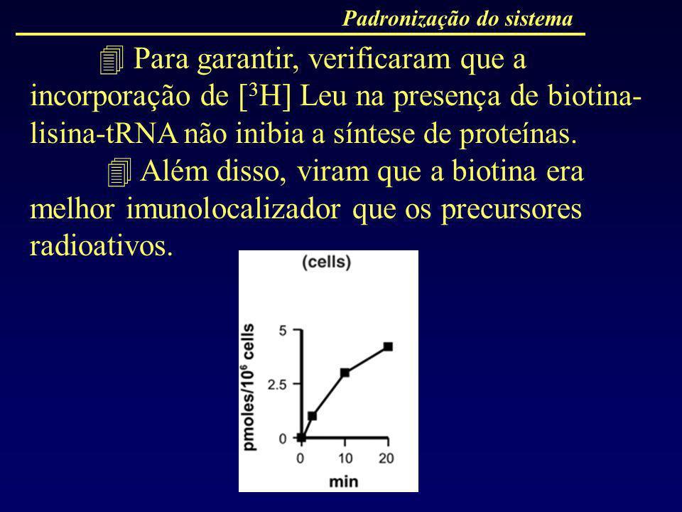 Padronização do sistema Para garantir, verificaram que a incorporação de [ 3 H] Leu na presença de biotina- lisina-tRNA não inibia a síntese de proteí