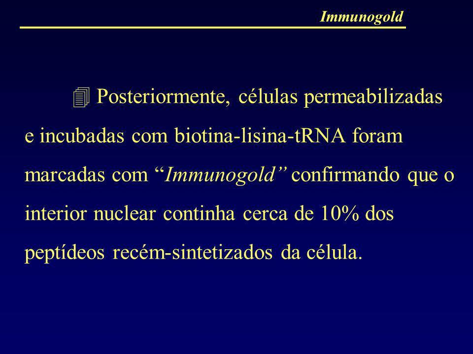 Immunogold Posteriormente, células permeabilizadas e incubadas com biotina-lisina-tRNA foram marcadas com Immunogold confirmando que o interior nuclea