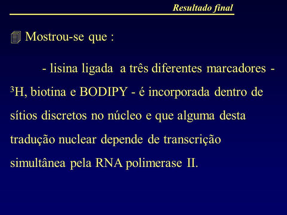 Resultado final Mostrou-se que : - lisina ligada a três diferentes marcadores - 3 H, biotina e BODIPY - é incorporada dentro de sítios discretos no nú