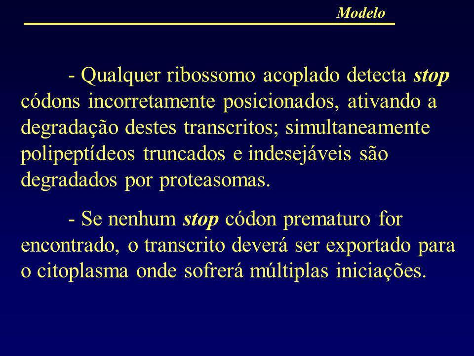 - Qualquer ribossomo acoplado detecta stop códons incorretamente posicionados, ativando a degradação destes transcritos; simultaneamente polipeptídeos