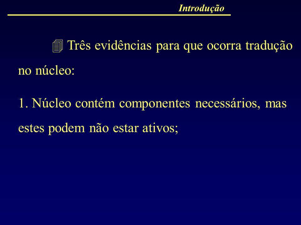 Introdução Três evidências para que ocorra tradução no núcleo: 1. Núcleo contém componentes necessários, mas estes podem não estar ativos;