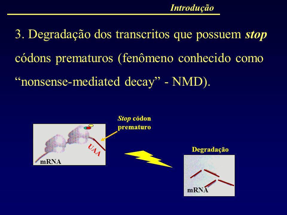 Introdução 3. Degradação dos transcritos que possuem stop códons prematuros (fenômeno conhecido como nonsense-mediated decay - NMD). UAA Stop códon pr