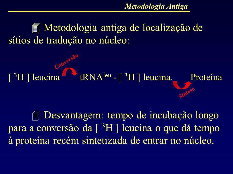 Metodologia antiga de localização de sítios de tradução no núcleo: [ 3 H ] leucina tRNA leu - [ 3 H ] leucina. Proteína Desvantagem: tempo de incubaçã