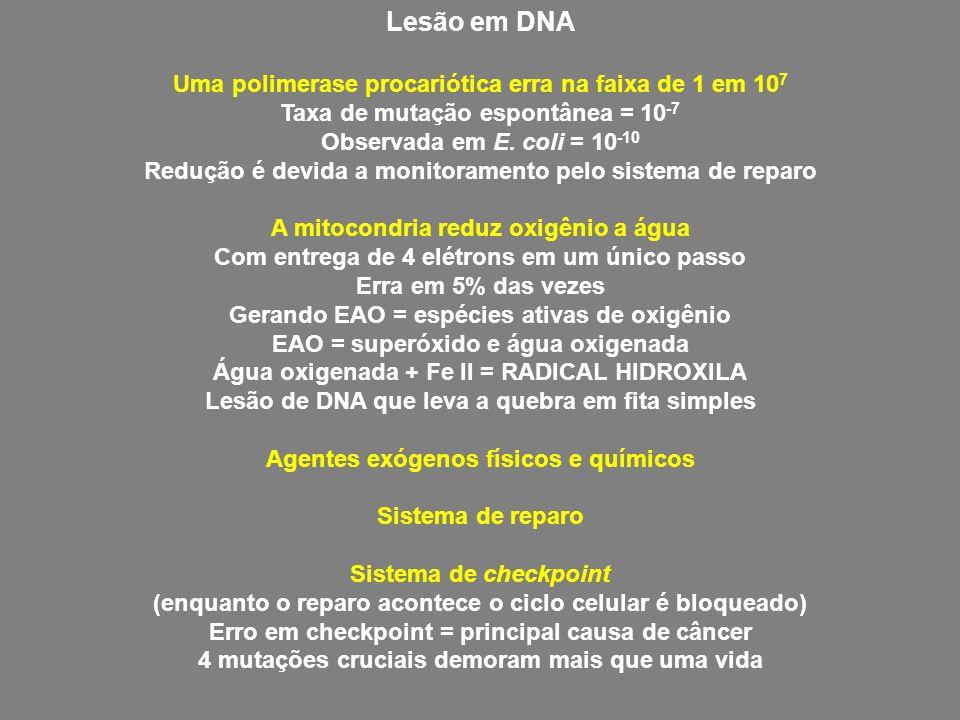 Lesão em DNA Uma polimerase procariótica erra na faixa de 1 em 10 7 Taxa de mutação espontânea = 10 -7 Observada em E. coli = 10 -10 Redução é devida