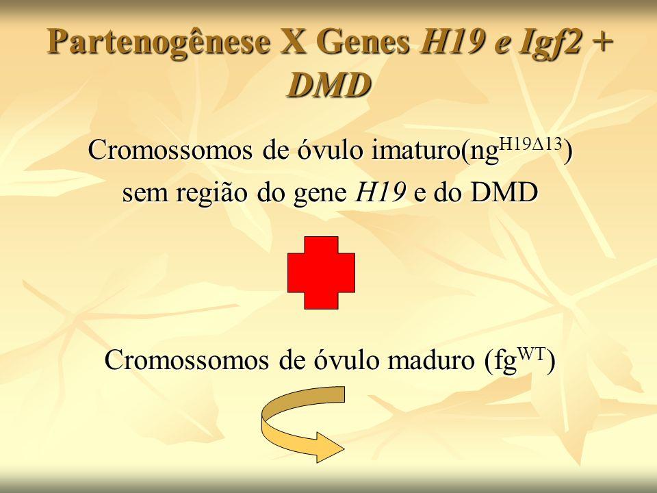 Partenogênese X Genes H19 e Igf2 + DMD Cromossomos de óvulo imaturo(ng) Cromossomos de óvulo imaturo(ng H19Δ13 ) sem região do gene H19 e do DMD Cromo