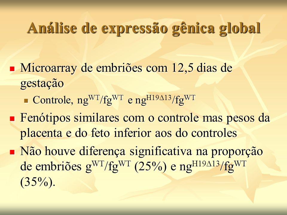 Análise de expressão gênica global Microarray de embriões com 12,5 dias de gestação Microarray de embriões com 12,5 dias de gestação Controle, ng WT /