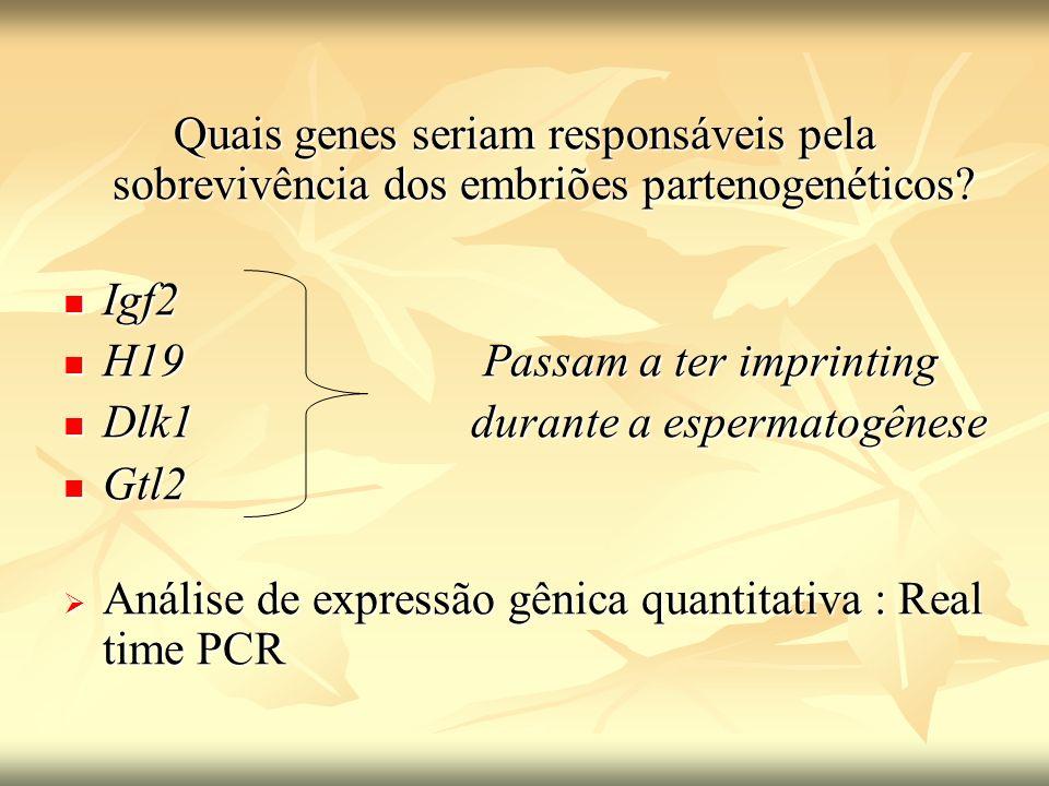 Quais genes seriam responsáveis pela sobrevivência dos embriões partenogenéticos? Igf2 Igf2 H19Passam a ter imprinting H19Passam a ter imprinting Dlk1