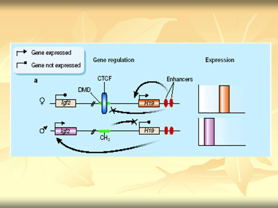 Dentre os 34 genes com imprinting: Dentre os 34 genes com imprinting: ng/fg WT ng H19Δ13 /fg WT Grb10 (mantém comportamento de F m F m, 2 cópias ligadas) Grb10 (mantém comportamento de F m F m, 2 cópias ligadas) Upregulated mais do que o dobro dos níveis de controle.