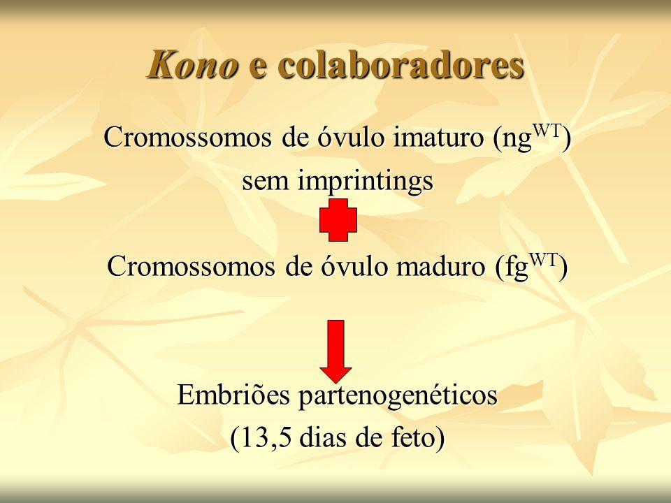 Kono e colaboradores Cromossomos de óvulo imaturo (ng WT ) sem imprintings Cromossomos de óvulo maduro (fg WT ) Embriões partenogenéticos (13,5 dias d