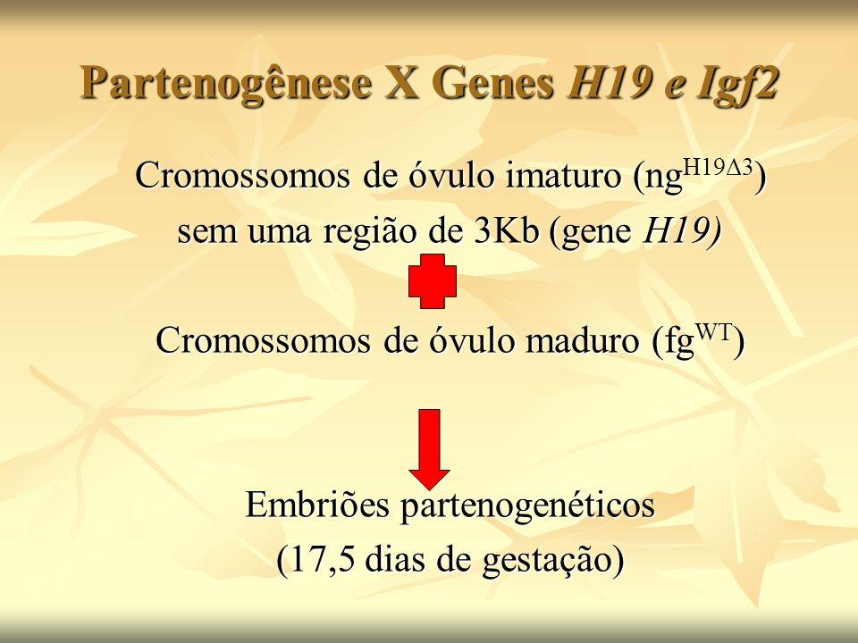 Partenogênese X Genes H19 e Igf2 + DMD Cromossomos de óvulo imaturo(ng) Cromossomos de óvulo imaturo(ng H19Δ13 ) sem região do gene H19 e do DMD Cromossomos de óvulo maduro (fg WT )