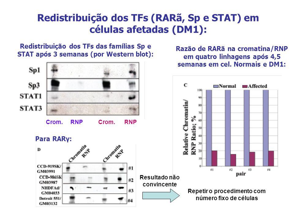 Redistribuição dos TFs (RARã, Sp e STAT) em células afetadas (DM1): Razão de RARã na cromatina/RNP em quatro linhagens após 4,5 semanas em cel. Normai