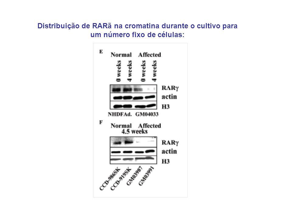 Distribuição de RARã na cromatina durante o cultivo para um número fixo de células: