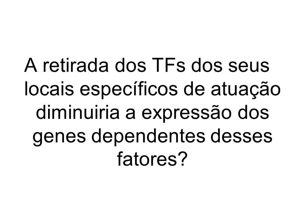 A retirada dos TFs dos seus locais específicos de atuação diminuiria a expressão dos genes dependentes desses fatores?