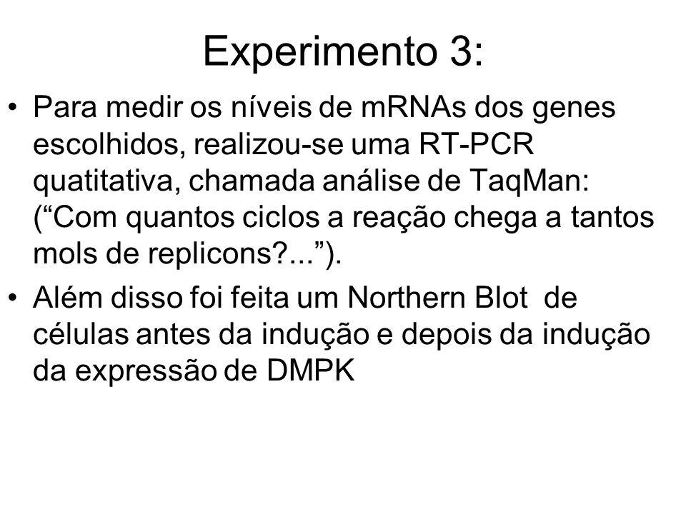 Experimento 3: Para medir os níveis de mRNAs dos genes escolhidos, realizou-se uma RT-PCR quatitativa, chamada análise de TaqMan: (Com quantos ciclos