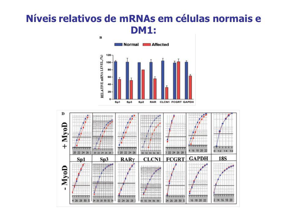 Níveis relativos de mRNAs em células normais e DM1: