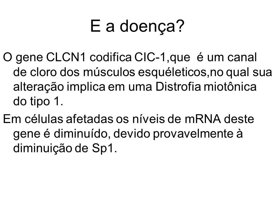 E a doença? O gene CLCN1 codifica CIC-1,que é um canal de cloro dos músculos esquéleticos,no qual sua alteração implica em uma Distrofia miotônica do