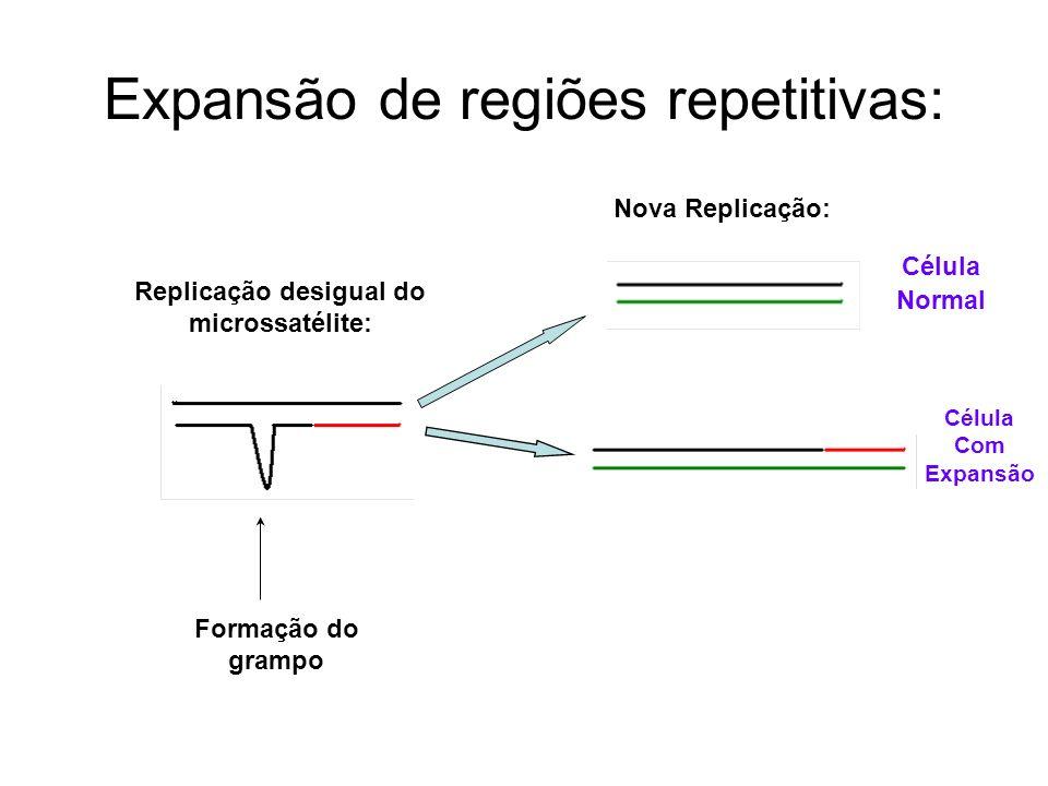Expansão de regiões repetitivas: Replicação desigual do microssatélite: Nova Replicação: Célula Normal Célula Com Expansão Formação do grampo