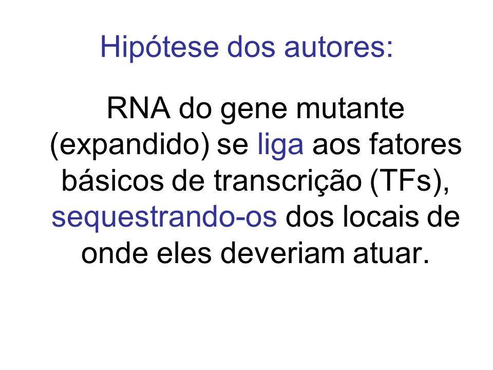 Hipótese dos autores: RNA do gene mutante (expandido) se liga aos fatores básicos de transcrição (TFs), sequestrando-os dos locais de onde eles deveri