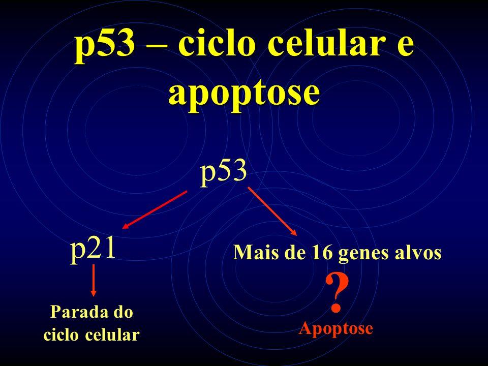 Possíveis Genes Alvos Puma (p53-upregulated modulator of apoptosis) Noxa (Noxius stress) Domínio BH3