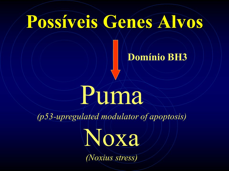 Possíveis Genes Alvos Puma (p53-upregulated modulator of apoptosis) Noxa (Noxius stress) Domínio BH3