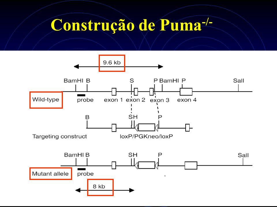 Construção de Puma -/-