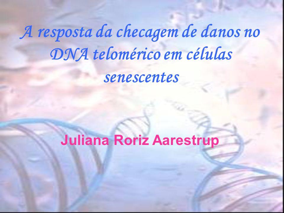 Telômero Contribuição direta na resposta a danos de DNA em células senescentes; Inativação de quinases = indução do sistema checkpoint em céls.
